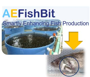 Stress and metabolic monitoring system to improve fish production