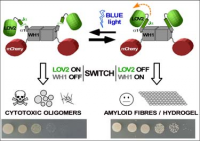 OPTOBIOTICS: Novel antibacterial proteins activated by blue light