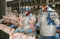 Seeking the technology to produce alternative products from poultry meat processing waste