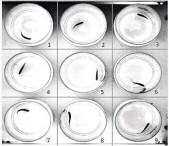 Imaging analysis of the zebrafish escape response